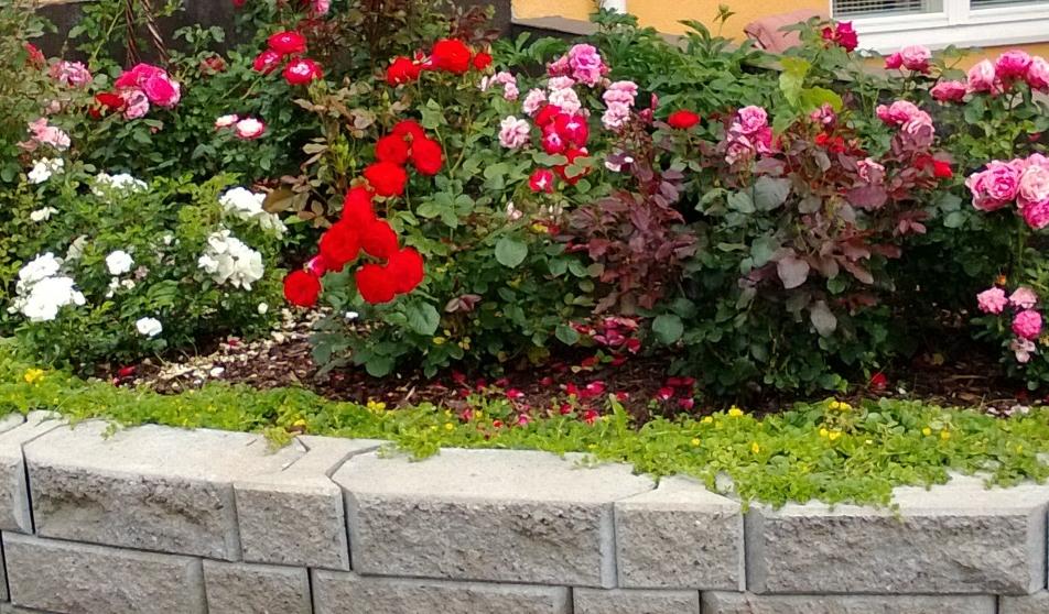 Kevättyöt pihassa, puutarhassa ja kasvimaalla